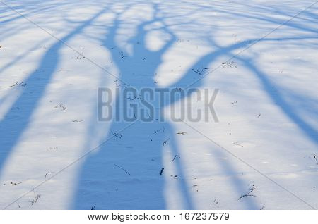 shadows of trees on a snowy plain south Bohemia Czech Republic