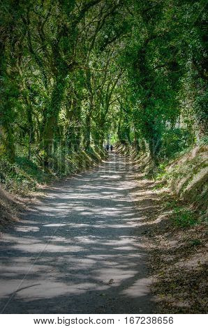 rural path covered with trees along saint james way in Portomarin stage. Pilgrimage. Camino de Santiago Galicia Spain
