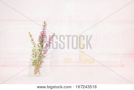 pink heather flower in beaker with test tube background