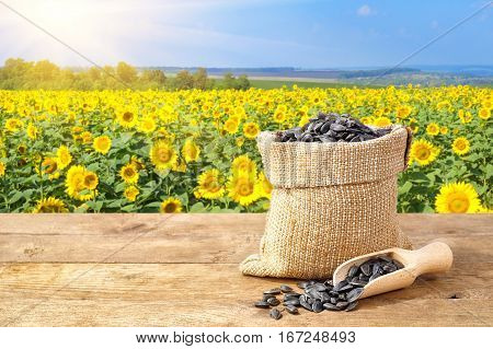 sunflower seeds in sack. Sunflower seeds in burlap bag on wooden table with field of sunflower on the background. Sunflower field with blue sky and sunshine. Photo with copy space area for a text