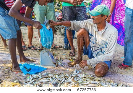 GALLE SRI LANKA - DECEMBER 3 2016: The fishing market on the beach is the best place to choose fresh local fish on December 3 in Galle.