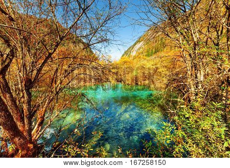 Scenic Pond With Emerald Crystal Water Among Colorful Fall Woods