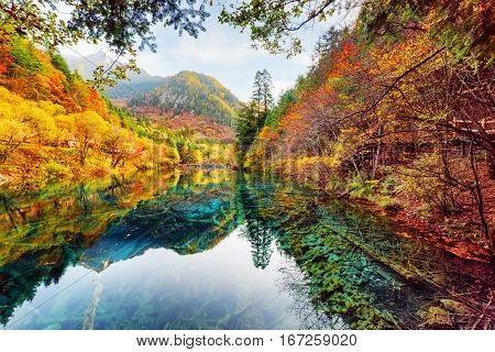 Wonderful View Of The Five Flower Lake Among Colorful Fall Woods