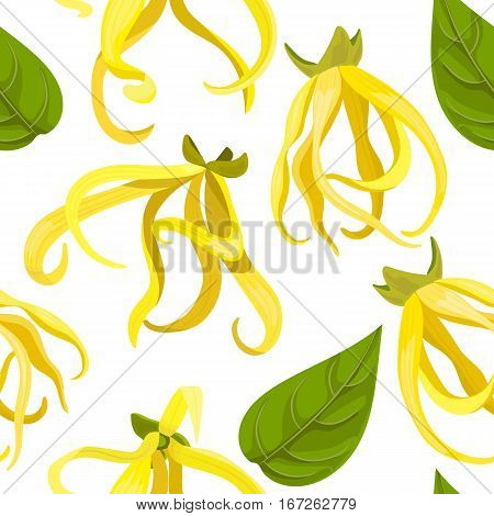 Ylang Ylang Cananga odorata seamless pattern vector. Beautiful tropical flowers. For greetings and postcards, banners, textile, prints, decoration, packing, cosmetics, health care aromatherapy