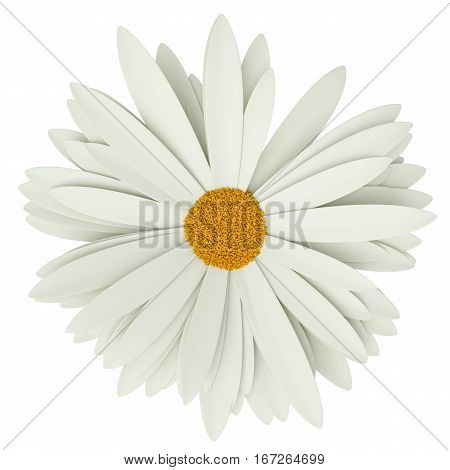 Chamomile flower, isolated on white background. Top view. Summer symbol for your design. 3D illustration