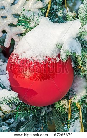 Beautiful red Christmas sphere on snow-covered fir branch in city park