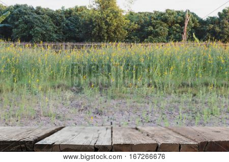 Sunhemp Flower Filed ,pummelo (blur Image) With Selected Fccus Wood Table For Display Your Product