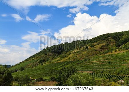 The view of vineyards in Germany, Cochem at the Moselle