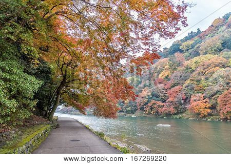 Walkway beside the river in autumn season at Arashiyama Kyoto Japan.