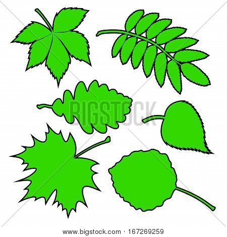 Vector illustration the Set of green leaves.