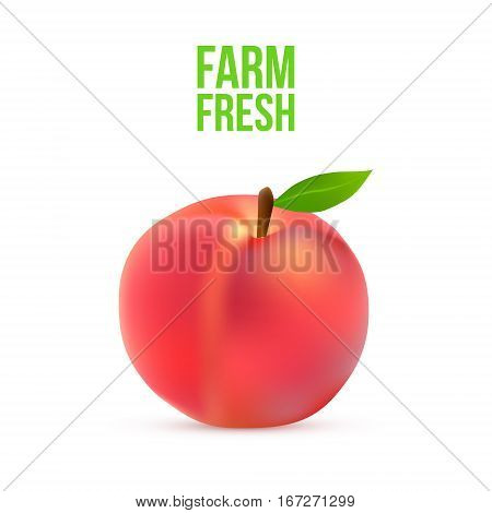 Ripe peach with a green leaf on a white background Vector