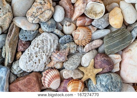 Abstract detail of the shells starfish and sea pebble stones