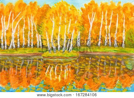 Hand painted picture watercolours - autumn landscape orange birch forest with reflection in water and little island with birches. Painted from real landscape in park Sokolniki in Moscow.