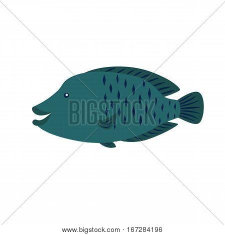 Napoleon Fish vector illustration for children isolated on white background