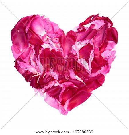 Colorful heart of Pink and crimson petals of peony flowers lying on white background. Decorative element for Valentines Day Mothers Day Birthday or wedding. Flat lay.