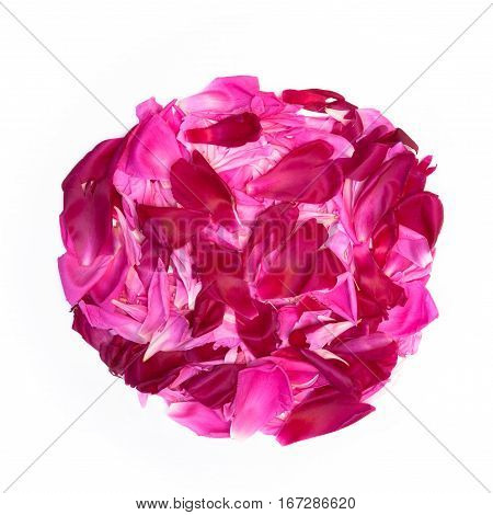 Decorative element of Pink and Maroon petals of peony flowers lying in the shape of a circle on white background. Flat lay.