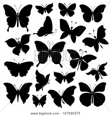 Set of different forms butterflies. Black silhouettes butterflies on white background. Vector illustration