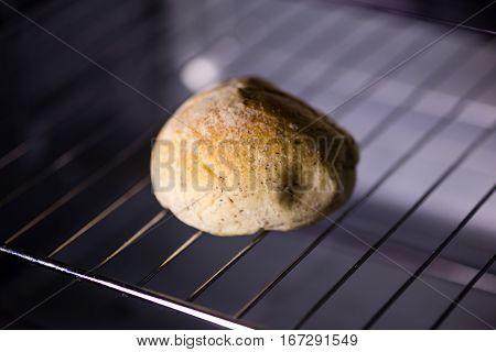Bun In Oven, Shallow Dof