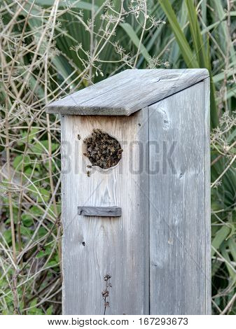Bees filling inside of wooden birdhouse and on front
