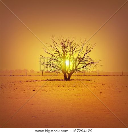 Lonely tree in the field at sunset. Vintage image.
