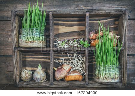 Seedlings, Garden Tools And Bulbs In Wooden Box
