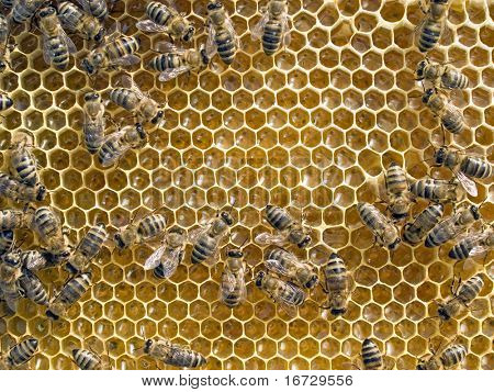 Bees on honeycomb background.