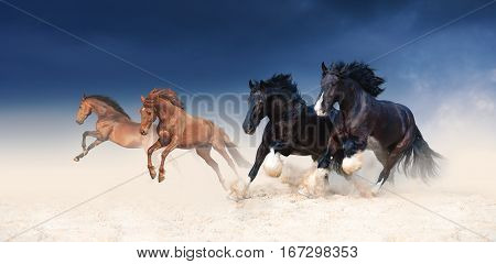 A herd of black and red horses galloping in the sand against the background of a stormy sky. Four stallions in the desert