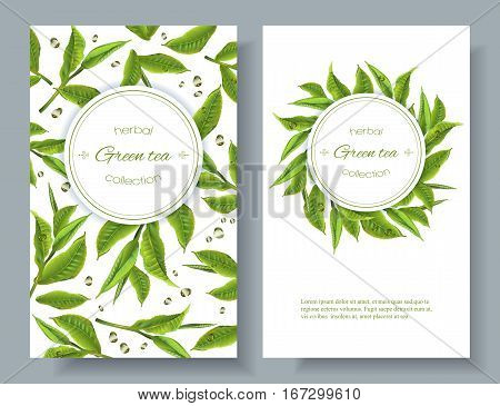 Vector green tea banners with tea leaves and drops on white. Design for packaging, tea shop, drink menu, homeopathy and health care products.