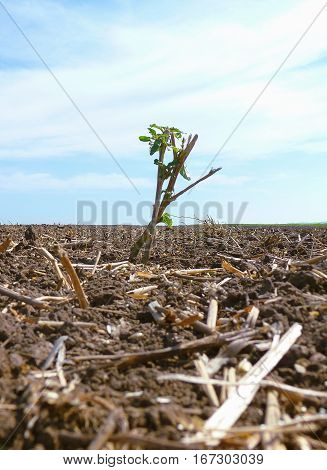Photo of a lone green plant standing in the middle of a plowed field