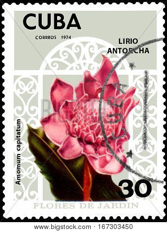 CUBA - CIRCA 1974: Postage stamp printed in Cuba shows Amomum capitatum, series garden flowers