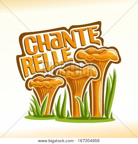 Vector logo Chanterelles Mushrooms: group of wild mushrooms with grass on ground forest glade, cartoon still life with lettering chanterelle, outdoors nature icon with inscription for edible fungi.