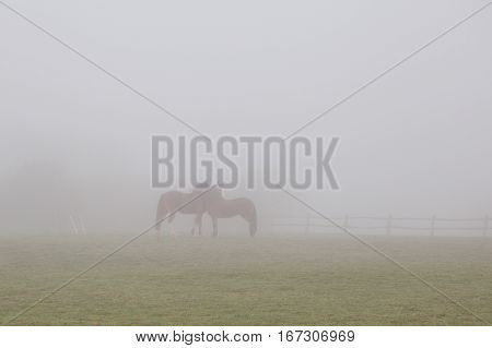 Abstract fog background: silhouettes of two horses rubbing each other