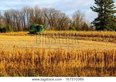 Farmer picking corn with a combine in Wisconsin.