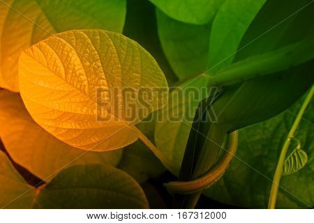 Green leaves texture of nature stock photograph with natural background filtered image