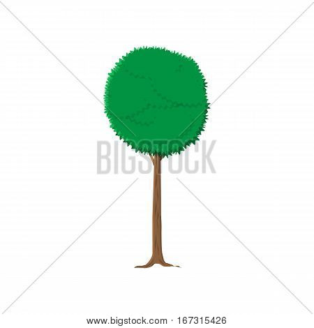 ash tree isolated on white. vector illustration in flat style