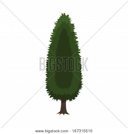 Cypress tree isolated on white. vector illustration in flat style