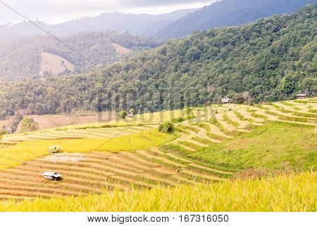 Terraced Rice Field In The Evening