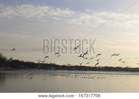 Silhouetted birds flying over frozen lake at sunrise