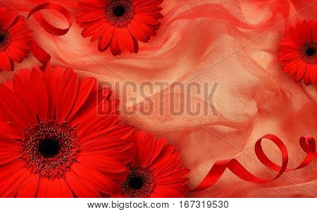 Red gerbera flowers and silk ribbons on draped fabric for Valentine's day background