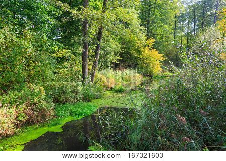 Natural Lesna river in summer midday with lot of bushes and plants along, Balowieza Forest, Poland, Europe