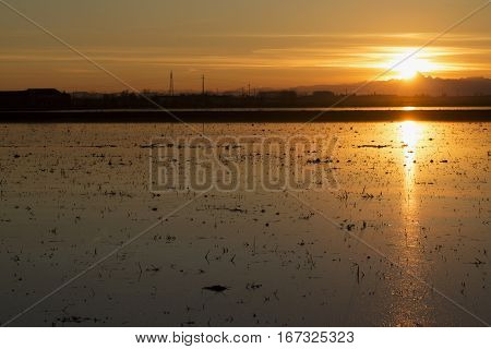 Rice Field At Sunset