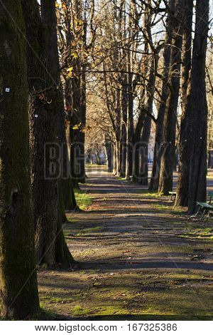 Alley In The Park