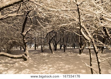 Winter, snow-covered urban park in the evening. Trees are covered with thick layer of snow and the trail disappearing into the distance