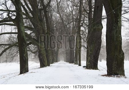 Fog and thaw in the Catherine Park in Tsarskoye Selo