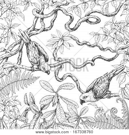 Hand drawn branches and leaves of tropical plants. Monochrome parrots sitting on liana branches. Black and white coloring page for adult. Vector sketch.