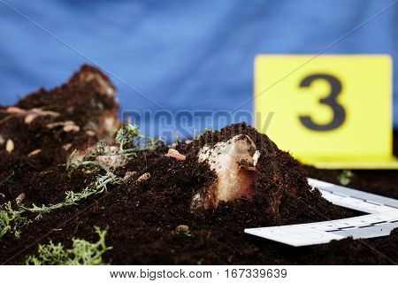 Working on collecting of fly larva on crime scene by criminologist
