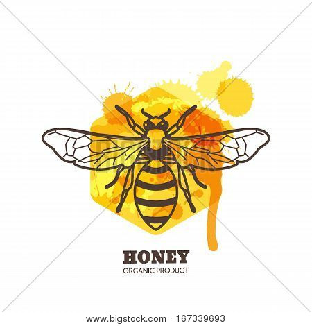 Honey Label, Emblem, Tag Design Elements. Vector Hand Drawn Outline Honeybee On Watercolor Honeycomb