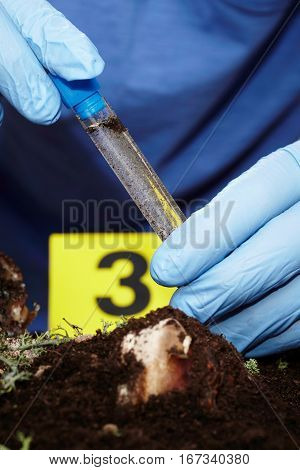 Pick up of fly larva on crime scene by criminologist