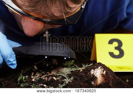 Exploring of fly larva on crime scene by criminologist with loupe