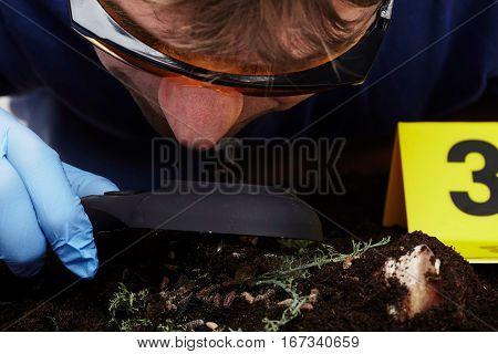 Exploring of fly larva on crime scene by criminologist